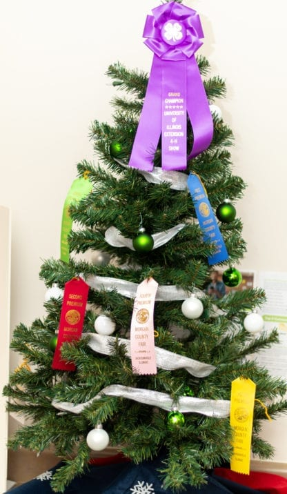 Morgan County Fair Ribbon Tree 2